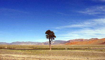 This is what Mongolia looks like (picture by XXX at Flickr, under Creative Commons).